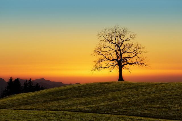 strom na pozemku